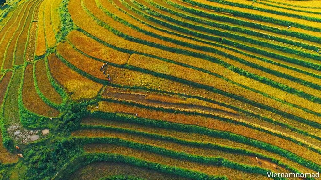 The best time to come to Sapa is from November to December when the rice fields are ripe