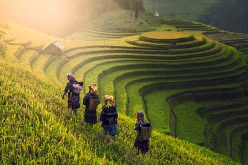 The Ultimate Vietnam Travel Guide
